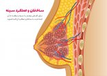 ساختمان و عملکرد سینه